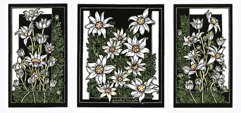 Flannel Flower Tryptich