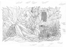 Seaside Wildflowers Drawing 5