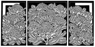 Waratah tryptich - The first printed images