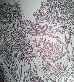 8 Blue Mtns Wildflowers CARVING Linoblock transfer 1